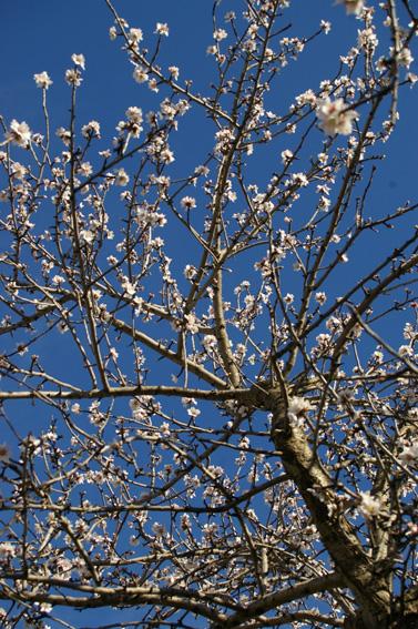 08 blossom 2314